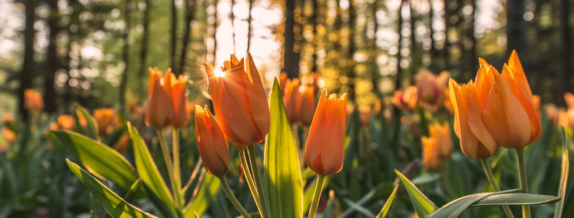 Slie_Flower1